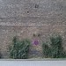 Small photo of Wall