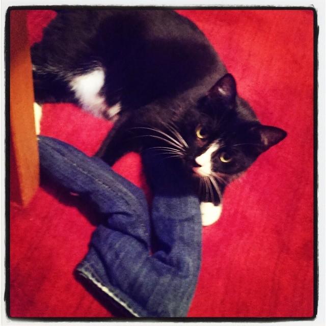 Cat pants!!