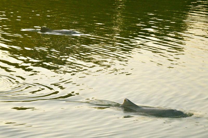 Sadgroves Creek dolphins