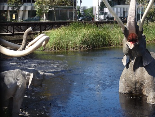 La Brea Tar Pits - Los Angeles, California (3)