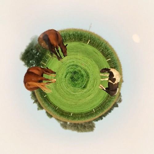 #livingplanetapp #horses #paarden #supermoon