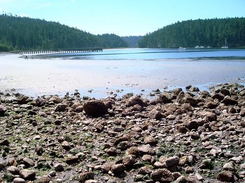 Bowman Bay at Low Tide