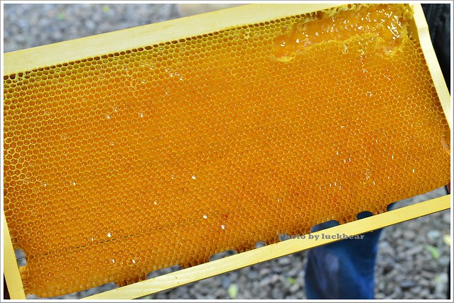 養蜂人家蜂采館010-DSC_6045