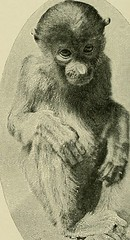 """Image from page 123 of """"Animal Life and the World of Nature; A magazine of Natural History"""" (1902)"""