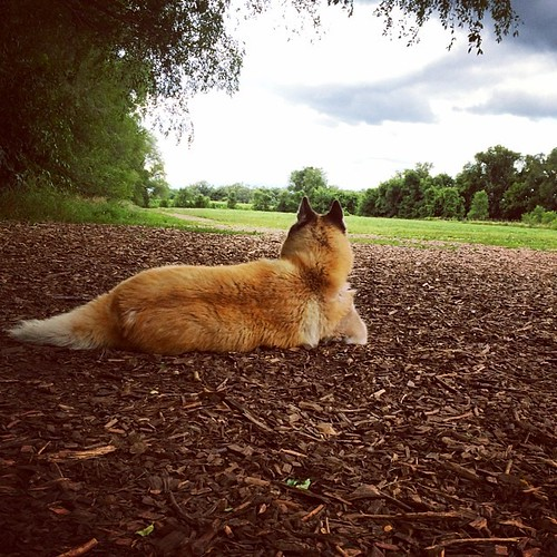 Bella looks on #dogpark