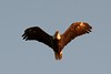 Beacon Shores Trip Aug 2014 - Bald Eagle!
