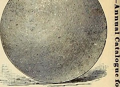 "Image from page 69 of ""Maule's seed catalogue : 1896"" (1896)"