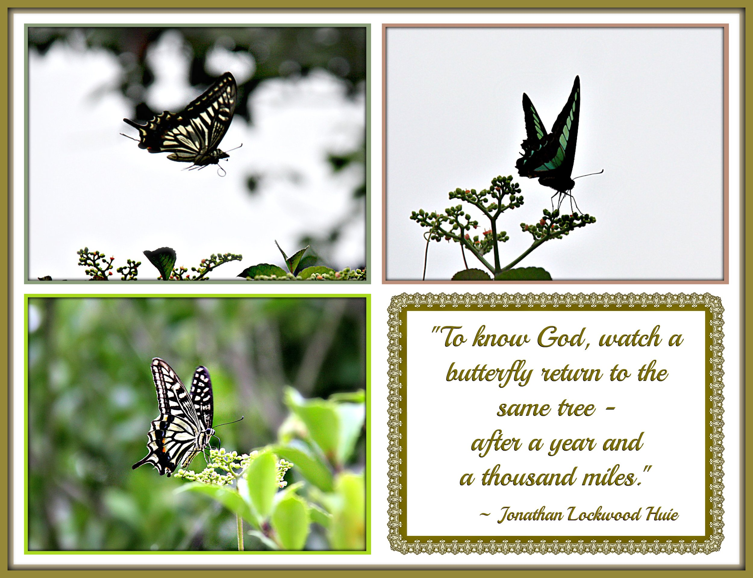 """To know God, watch a butterfly return to the same tree - after a year and a thousand miles."""