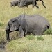 Elephants of the Masi Mara-4