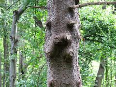 hippo tree
