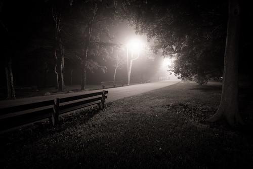 park morning trees light bw white mist black monochrome fog sunrise nikon nikkor f4 d610 1635mm