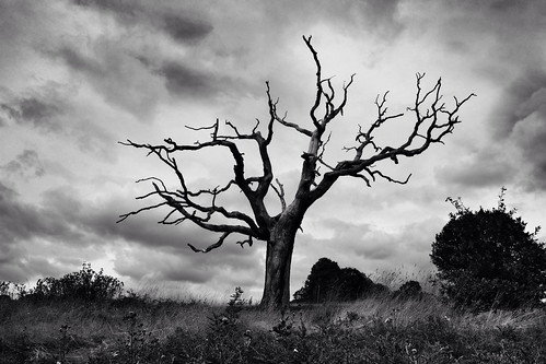 Lonely Tree Hampstead Heath