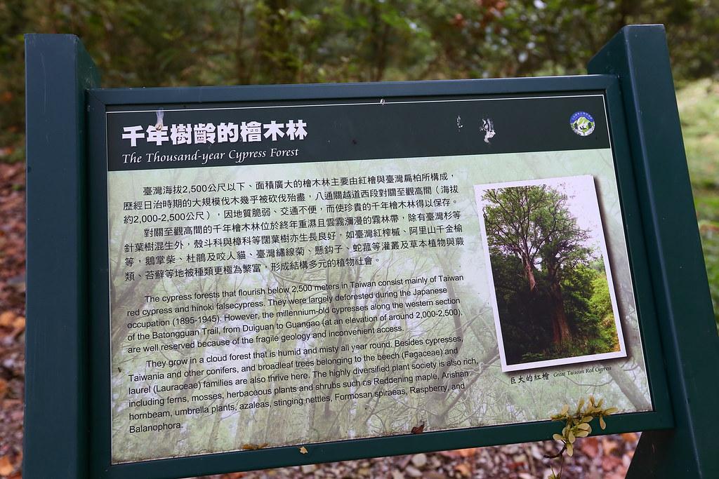 課本沒教、玉山國家公園也隱瞞的真相:原始巨木林其實是被國民黨政府砍光的
