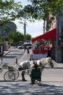 Driver waiting for passengers at Place Jacques Cartier