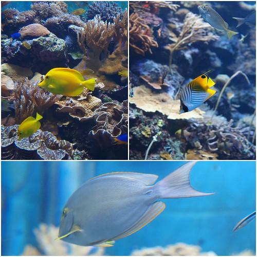 國立海洋生物博物館1