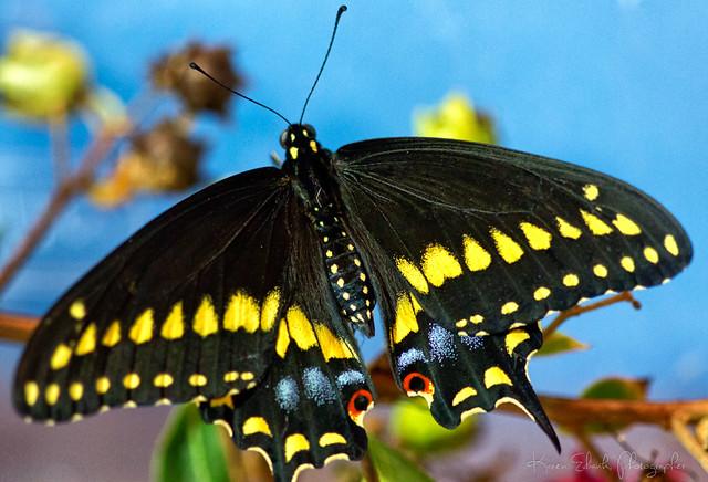 butterfly9-11-14