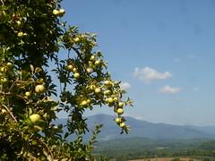 apples, Crabtree Falls, Moroccan dinner 001