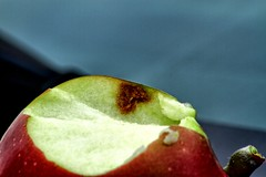 Brown marmorated stink bug damage in apples