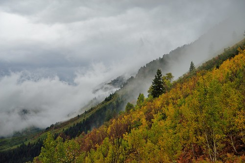 autumn mist mountain storm tree fall wet rain fog clouds cool side aspen slope americanforkcanyon quakie