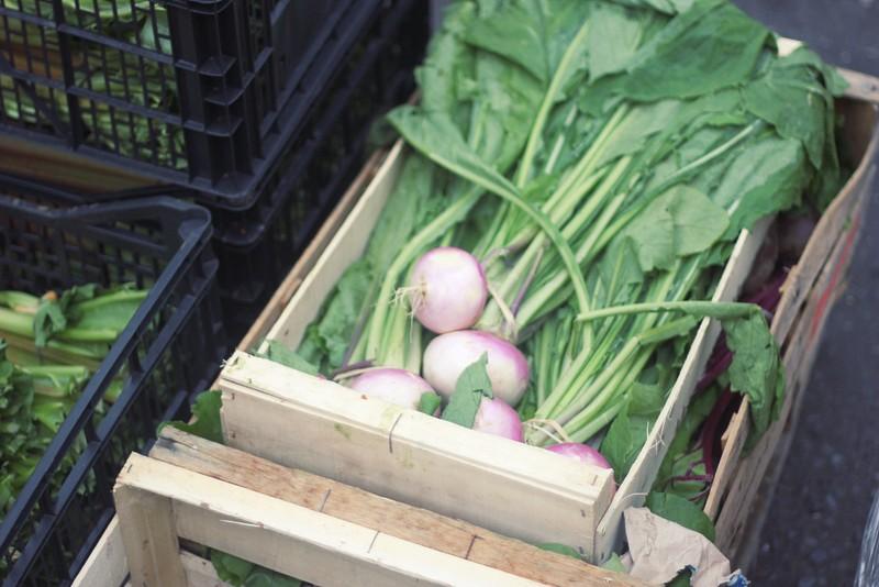 turnip cases