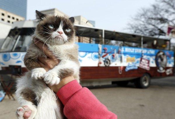 Фильм Grumpy Cat