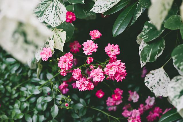 {madison square garden} via chevrons & éclairs