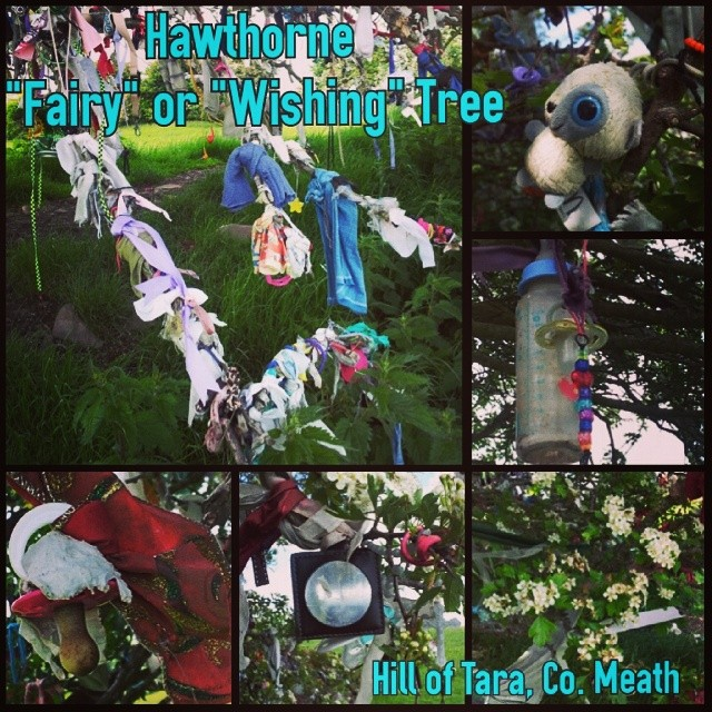Wishing Trees (aka May Bushes or Fairy Trees) are hawthorn trees where people tie ribbons to ask blessings from the local saints/deities/wee folk. The hawthorn usually flowers in May, time of the Bealtaine festival of rebirth (now generally known as May D