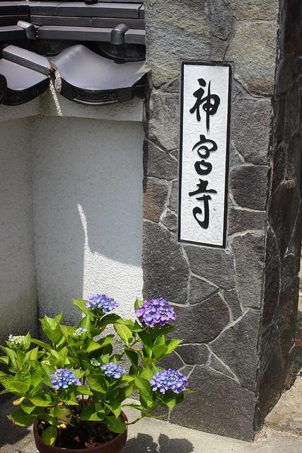 20140614.16_ajisai07