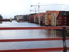 20140501 Grues sur Trondheim (Norvège)