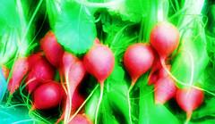 vegetable, red, plant, produce, food, radish,