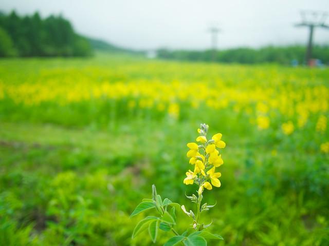 140622_Yamanashi 1