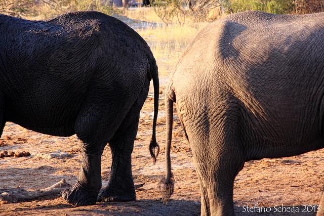 Nata Elephant Sands Campsite - Botswana