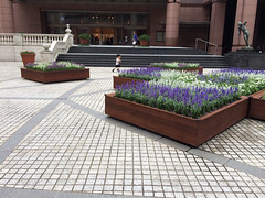 恵比寿ガーデンプレイスで機関車ごっこ 2014/6/29