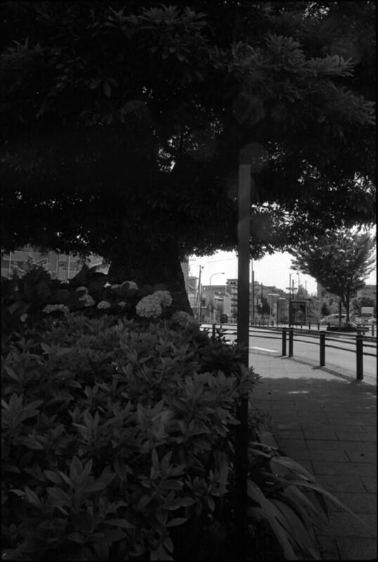 20140619 LeicaM4-P Elmarit28 400TX TMD 008