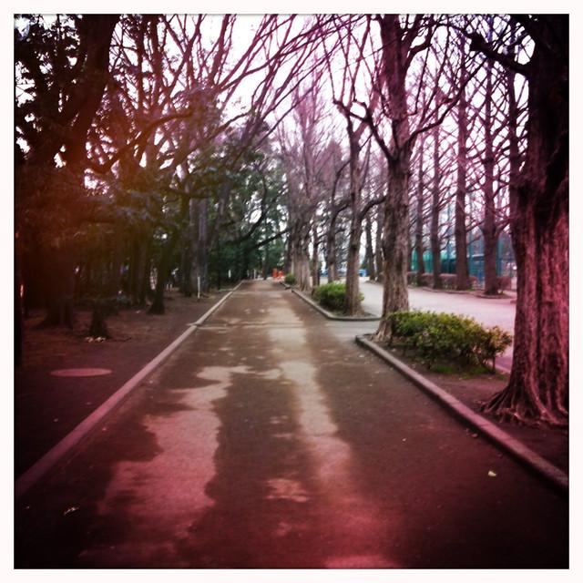 Hipstamatic-赤い並木