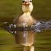 DuckFace by Roeselien Raimond
