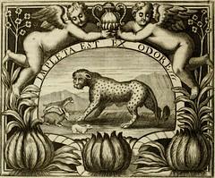 """Image from page 417 of """"Simboli predicabili : estratti da sacri evangeli che corrono nella quadragesima : delineati con morali, & eruditi discorsi"""" (1692)"""