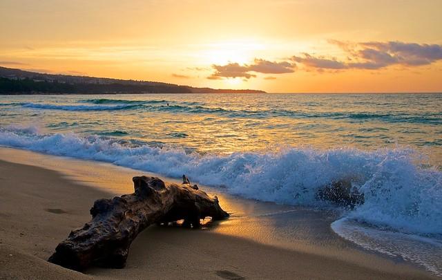 Driftwood at Varna beach