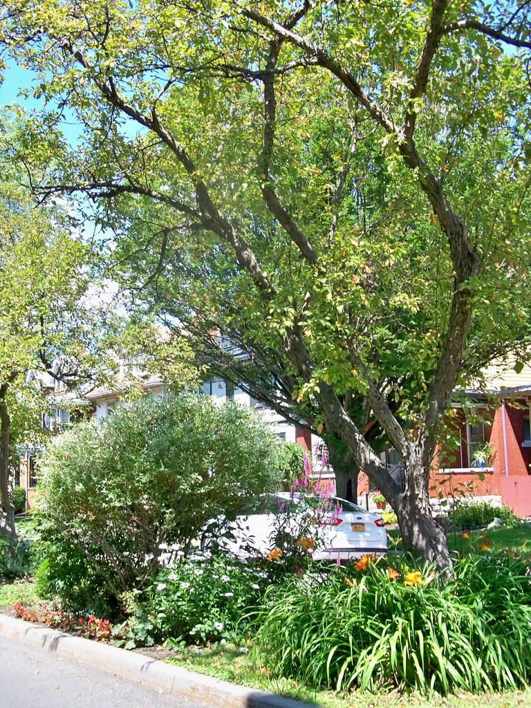Garden Walk Buffalo Cottage District 5: The Buffalo, New York Thread: 40 Years Of Renaissance