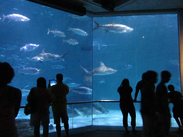Aquarium of the Americas by CC user moonlightbulb on Flickr