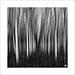 weeping forest by Luke Tscharke