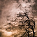 Small photo of Arbre sur nuages