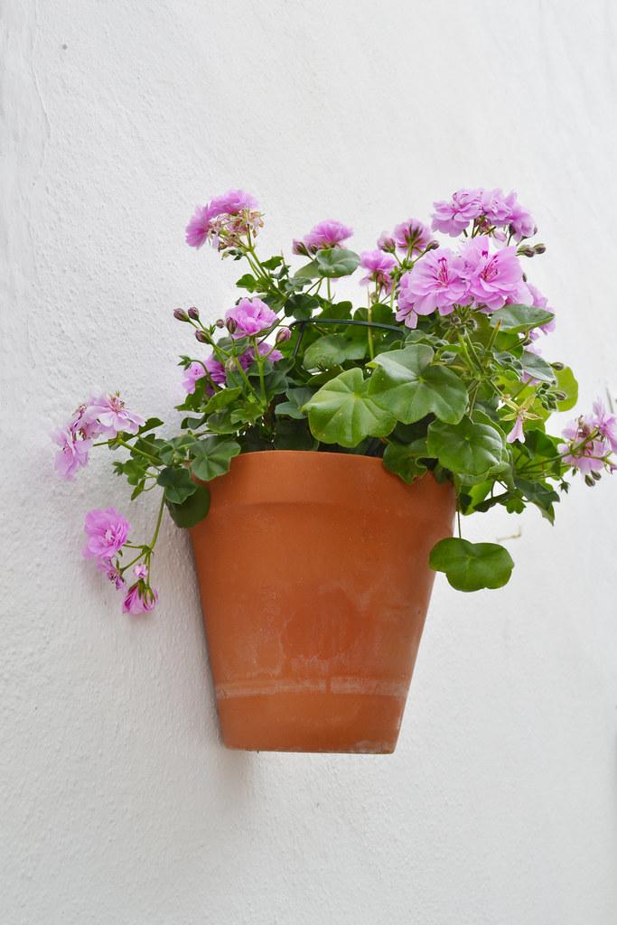 Maceta de flores lilas