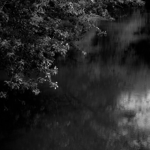 light summer blackandwhite bw abstract reflection water monochrome forest river square landscape blackwhite nikon branches desplainesriver d5000 halfdayforestpreserve noahbw