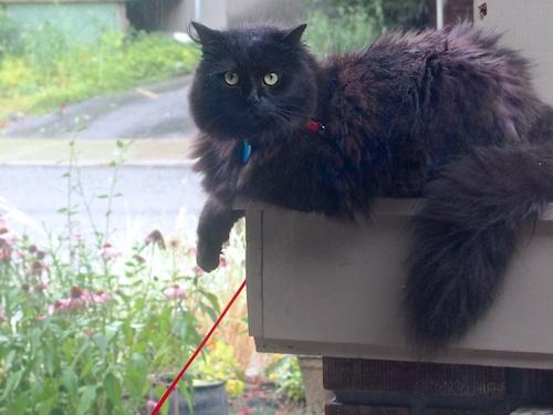 semi-rain-sheltered