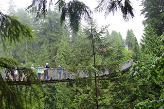 Capilano Suspension Bridge 의 이미지. trees canada forest rainforest britishcolumbia capilano suspensionbridge douglasfir
