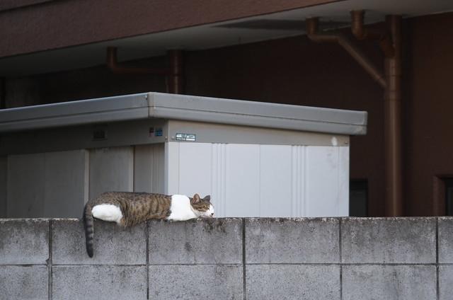 東京路地裏散歩 新宿区下落合のネコ 2014年8月17日