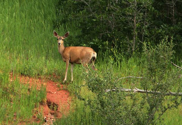 14953097656 746b038aa1 z Red Rock Canyon Open Space: Colorado Springs