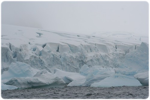 Cuverville Island (10)