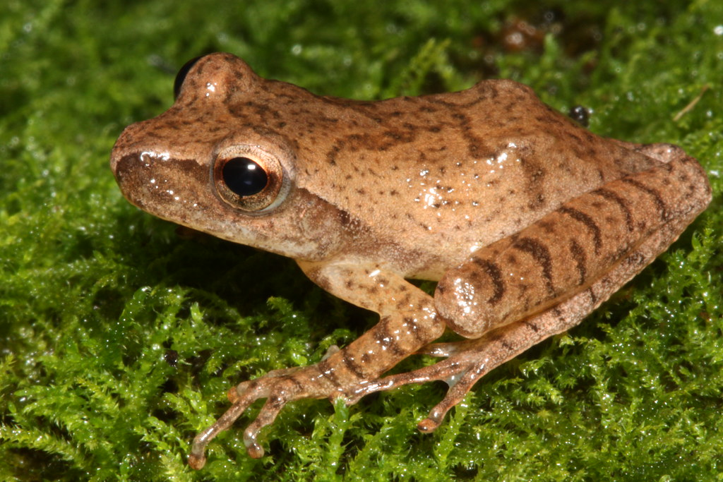 Spring Peepr in Florida